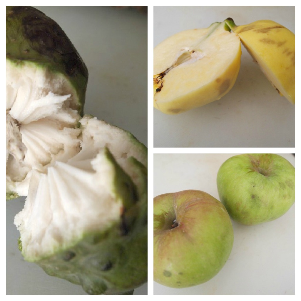 Cherimoya, Quince, Apple