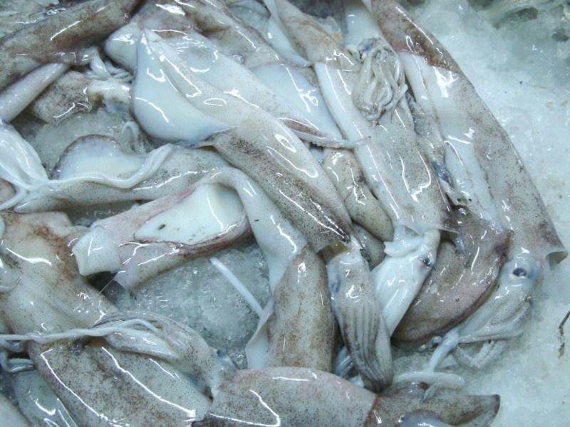 calamares-1024x768